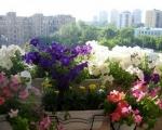 Балконные ящики для цветов-7-1