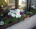 Балконные ящики для цветов-7-8