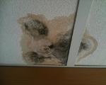 Плесень и грибок на стенах-7-4