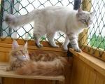 Полки для кошек на балконе