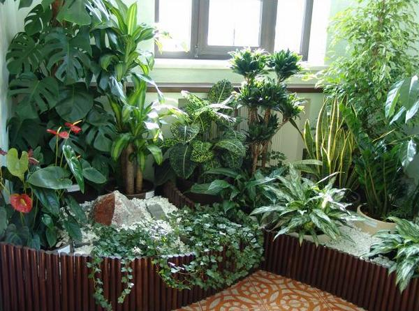 зимний сад на лоджии
