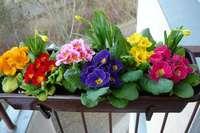 ящик для цветов на балконе