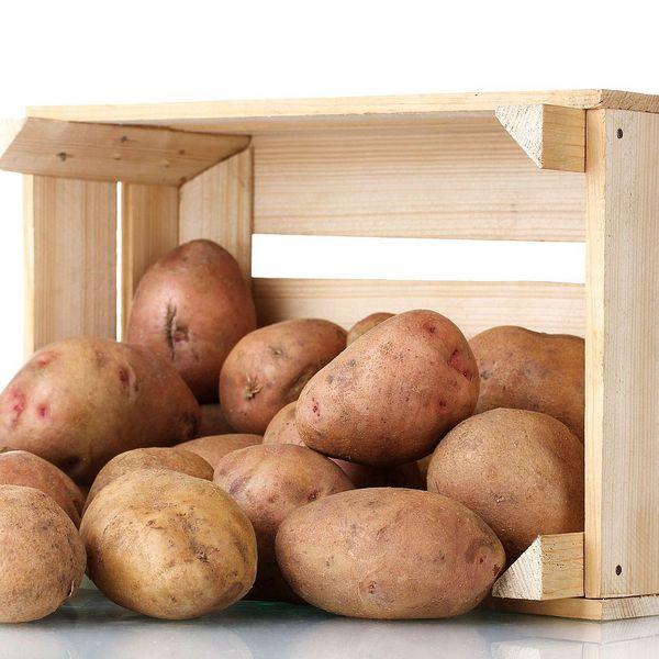 погребок для хранения овощей