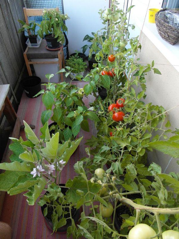 Овощи на балконе своими руками 453