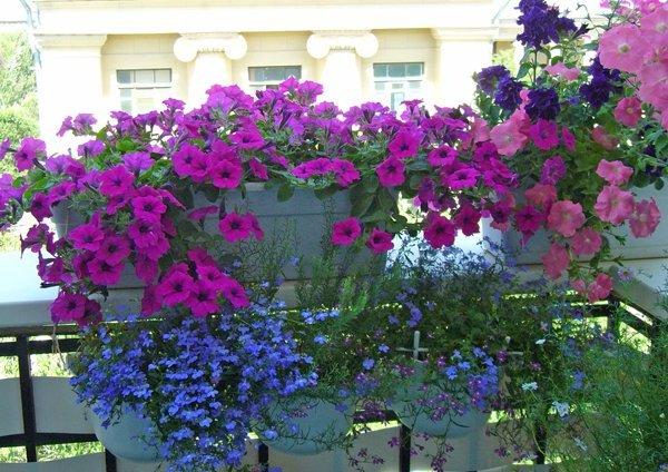 дизайн цветов на балконе